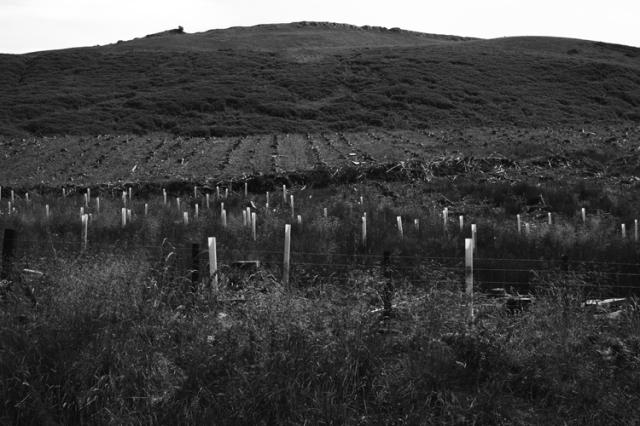 0185 managed woodland