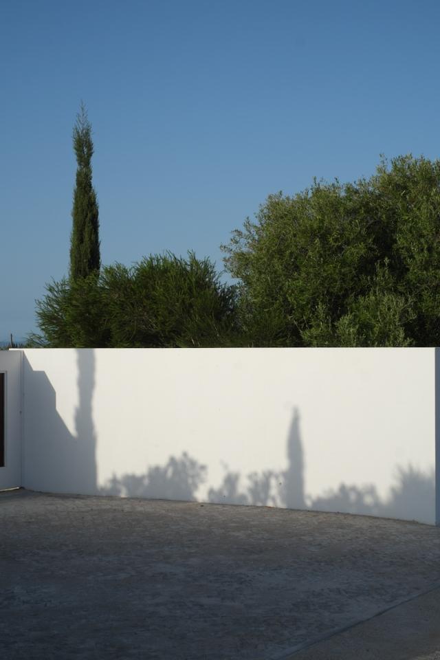 0747 wall tree tavira.jpg